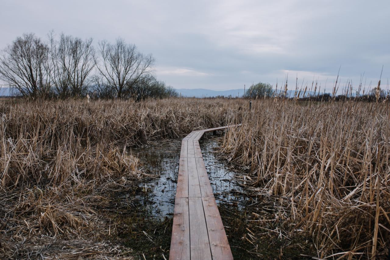 Ochranári na východe Slovenska zachraňujú vysychajúce mokrade